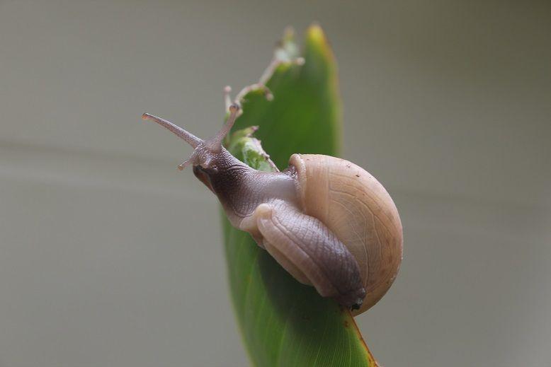 """Résultat de recherche d'images pour """"PHOTo escargot ALPINISTE"""""""